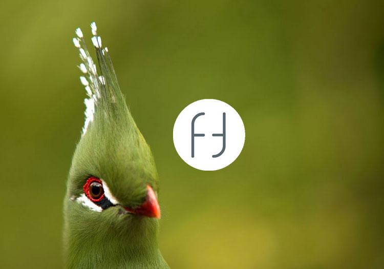 creation site internet société followfocus